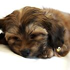 Dozing Puppy by JCMPhotos