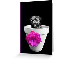 Pot Plant Puppy Greeting Card