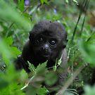 Woolly Monkey Peek-A-Boo by ApeArt