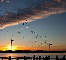 Port Macquarie Sunset by Ian Moses