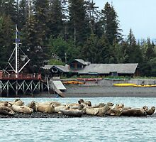 Seals at Kachemak Bay Wilderness Lodge by A.M. Ruttle