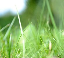 Grass by lwebster