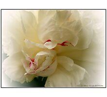 """White Peony"" by Maj-Britt Simble"