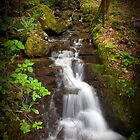 Backbone Falls by C David Cook