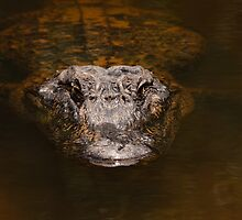 Everglades Alligator by Joe Elliott