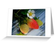 The Strawberry Stage. Greeting Card