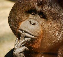 the thinking orangutan by alliteration