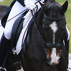 Dressage by Jennifer Saville