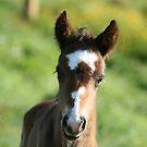 """Well I am Cute"" - 2 day old foal by Sophie Lapsley"