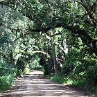 Canopy Road by RebeccaBlackman