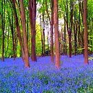 Blue Heaven by ciaobella2u