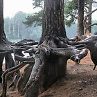 Old pine-trees ashore lake by Tasha1111