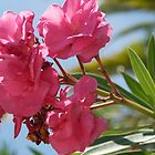 pink oleander by Mark de Jong