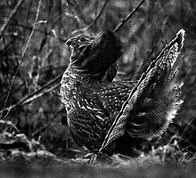Deep in the Aspen Wood (b&w) by A.M. Ruttle