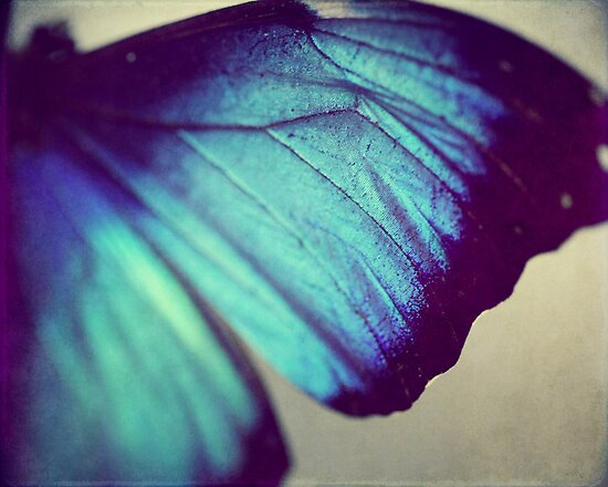Black and Blue Wing by ameliakayphotog