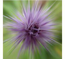 Thistle star Photographic Print