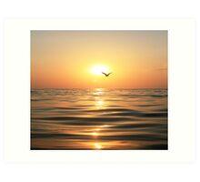 Sea, sunset and seagull Art Print