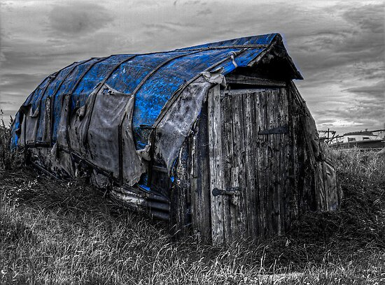 Who Lives in a Shed Like This? by Ryan Davison Crisp