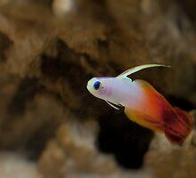 FireFish by Aaron Radford