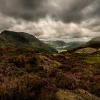 Haystacks Heather  by Stewart Laker