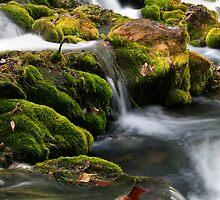 Meramec Spring by Joe Thill