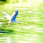 Blue Blur by Lynn Armstrong
