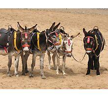 British Beach Donkey's Photographic Print