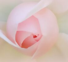 Palest of Pink by Patricia Montgomery