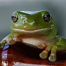 Froggie, Froogie! by Gabrielle  Lees