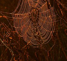 Glowing Cobweb by Christine Smith