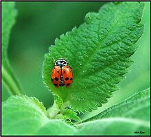 Lady Bug and the Leaf by Mattie Bryant