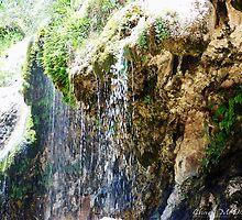 Sitting Bull Falls by Charli McDonald