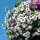 Bouquet by emilymhanson