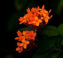 Orange by Dennis Rubin IPA