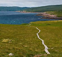 East Coast Trail- Newfoundland by David Chesluk