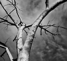 Dead tree by Jeffrey  Sinnock