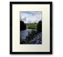 Light on Pines Framed Print