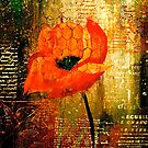 The Poppy Journals...Trapped by © Janis Zroback