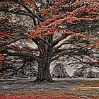 The Magical Tree of Brodsworth by Ryan Davison Crisp