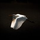 Stork by sparrowdk