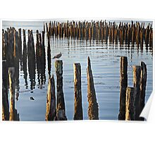 Hanging at the Pier Pilings Poster