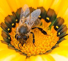 Bee at work pt 2.0 by Shehan Fernando