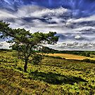 &quot;Forest View&quot; - New Forest National Park Hampshire England by silvcurl09