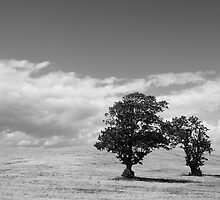 Four Trees by Stephen Maxwell