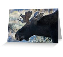 First Bull Greeting Card