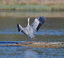 Another Heron by dougie1page2