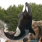 Killer whale by Sean McConnery