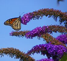Butterfly on Bush by quiltmaker