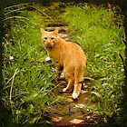 Orange cat in the garden by oxygen