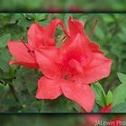 Red Azalea by jalewin